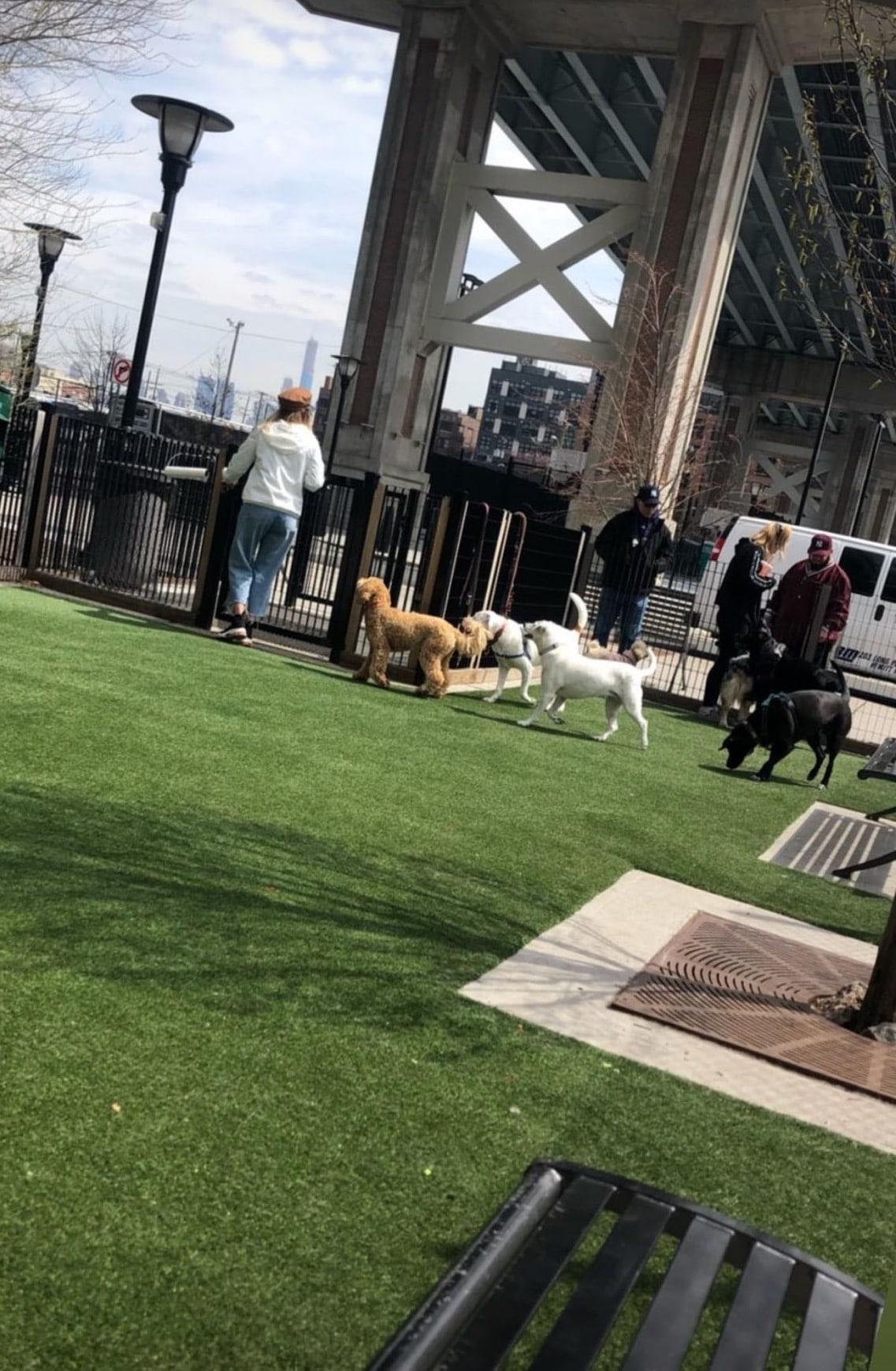 dogs dog run