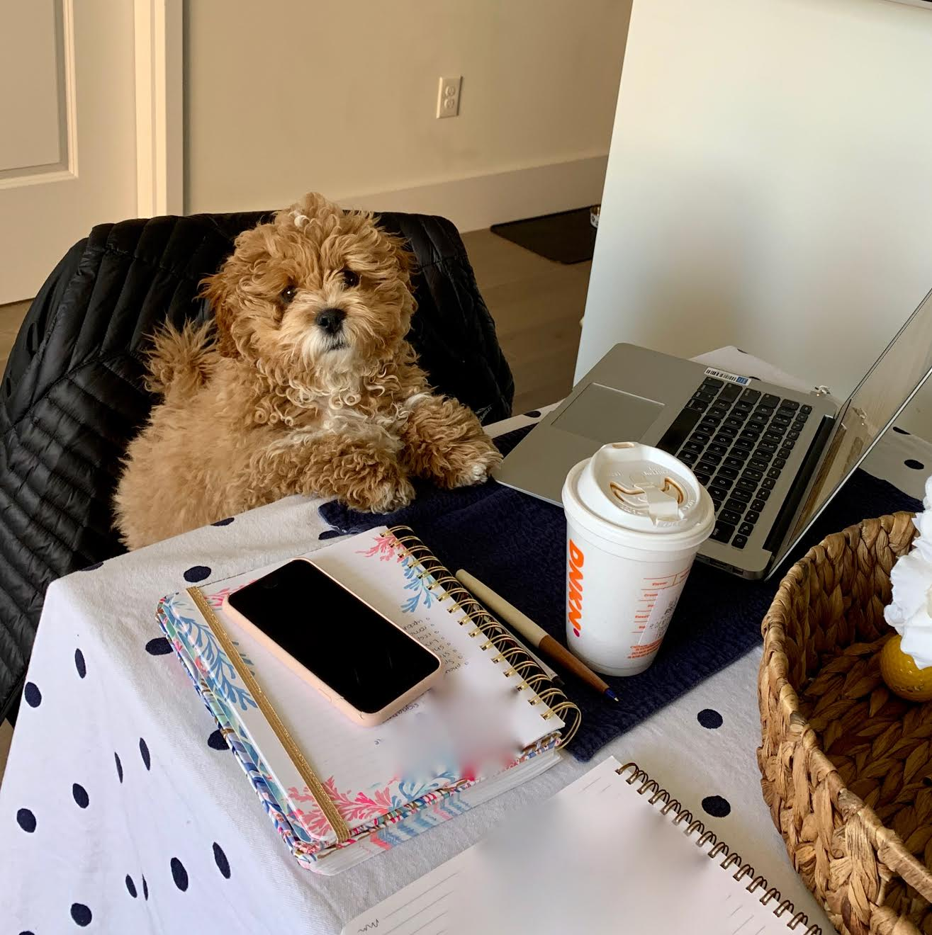 ollie pets working from home